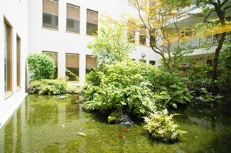 Japanese style pond